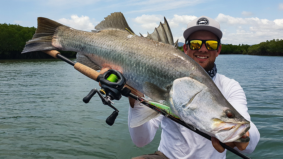 Seaforth barramundi falling victim to a lethal lure and Kistler Rod